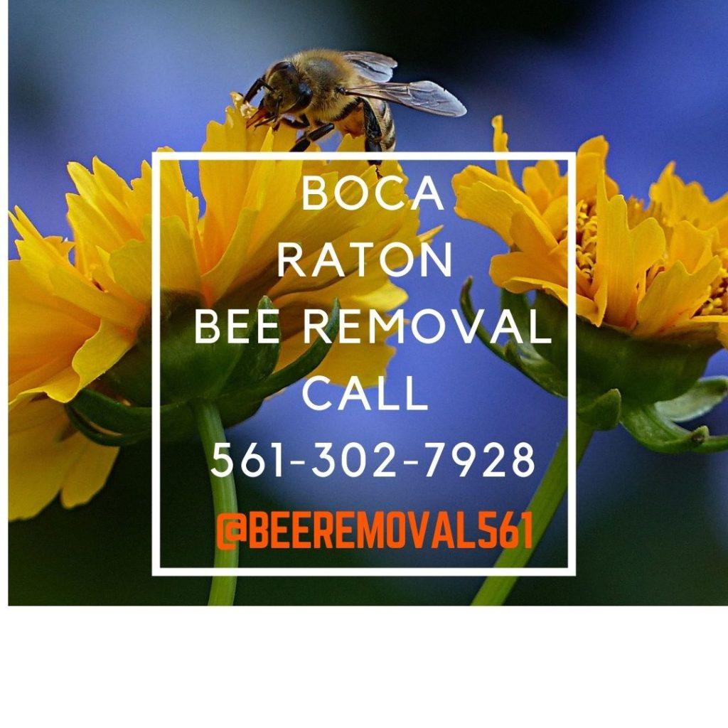 Boca Raton - Brian More Bee Removal Services