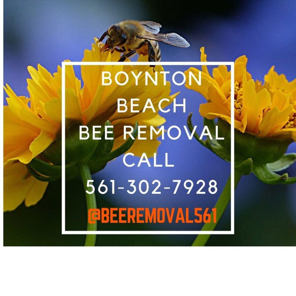 Boynton Beach Bee Removal Services - Brianthebeeman.com