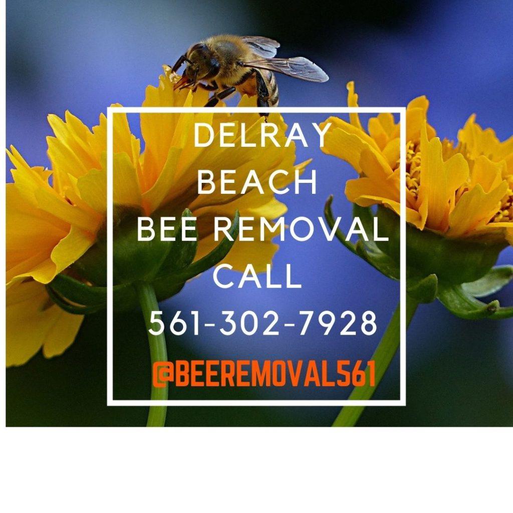 Delray Beach Bee Removal Services - Brianthebeeman.com