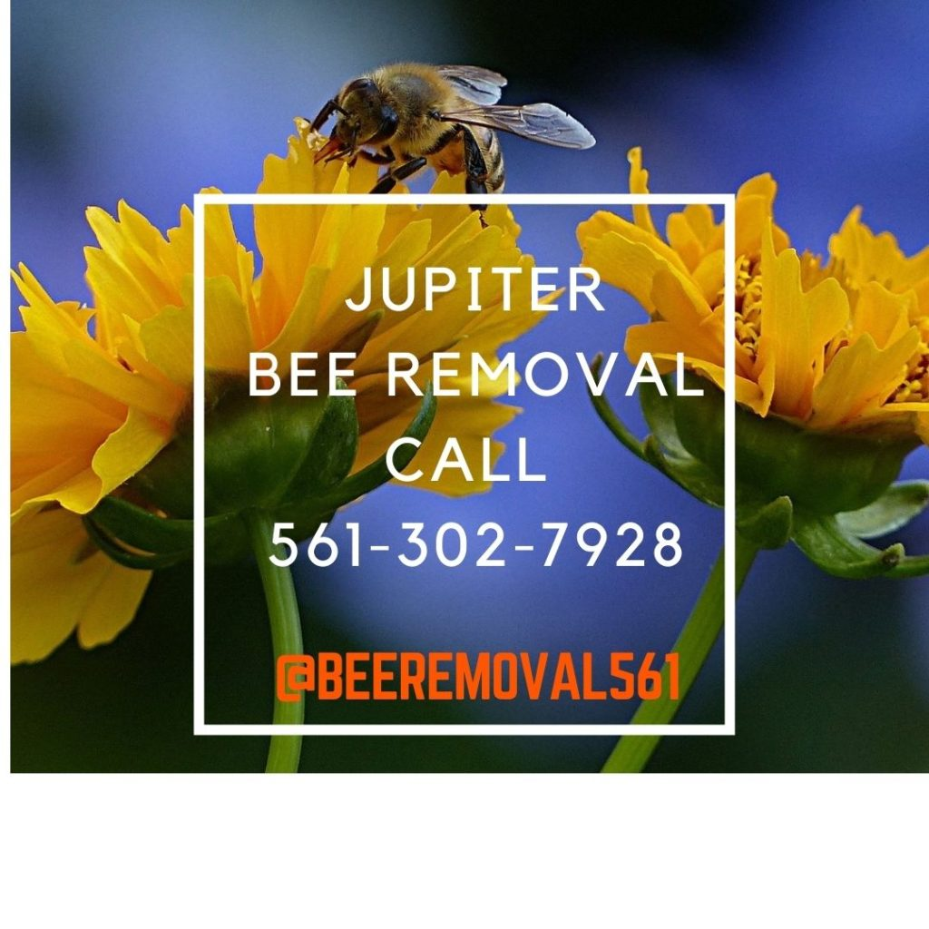 Jupiter Bee Removal Services - Brianthebeeman.com