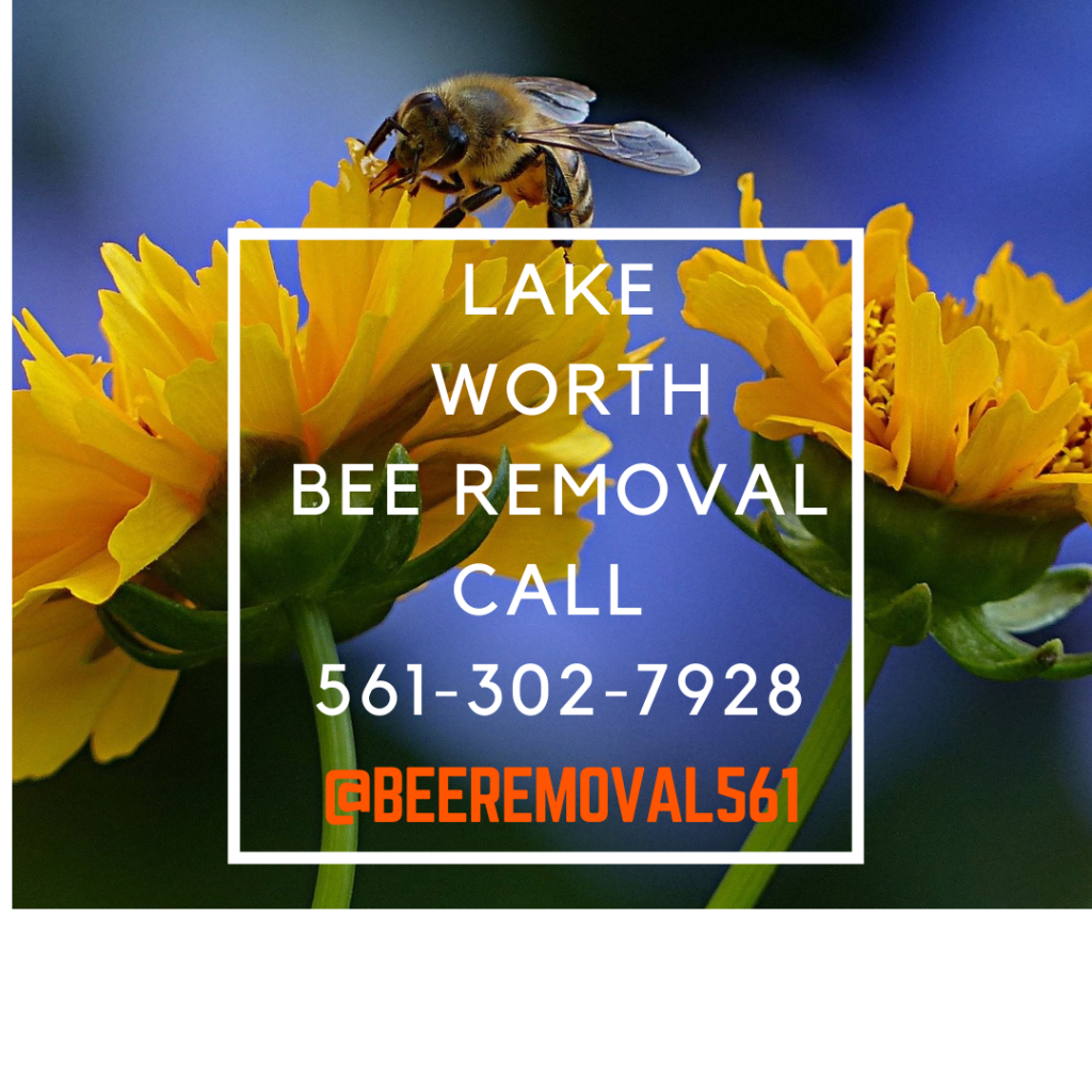 Lake Worth - Bee Removal Services - Brianthebeeman.com