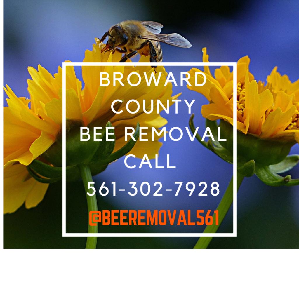 Broward County - Bee Removal Services - Brianthebeeman.com